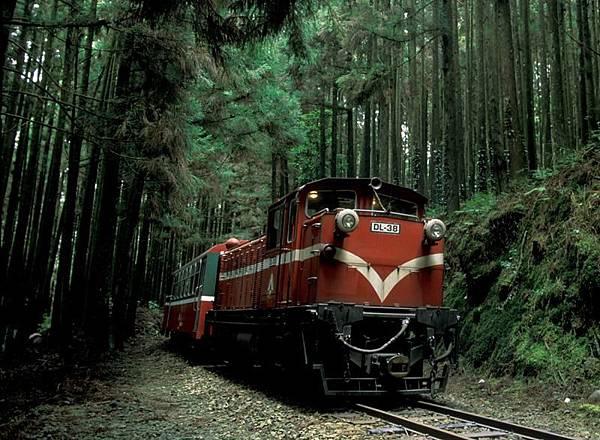 1123026阿里山穿梭森林.jpg