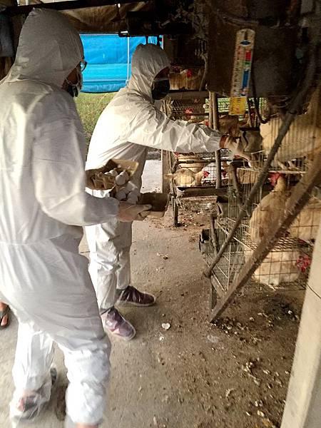 0213014畜禽蛋奶肉品安全.jpg