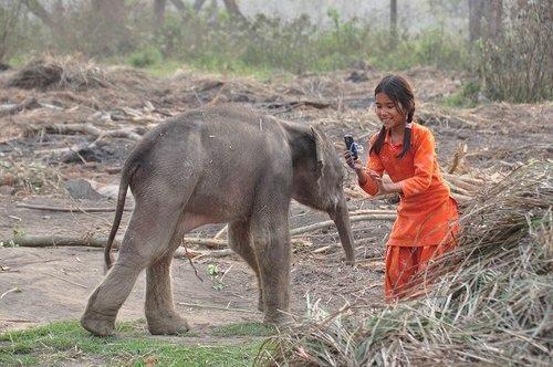 120321尼泊爾之旅三個月小象[ni] 342