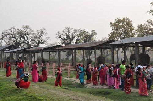 120321尼泊爾之旅[ni]大象復育中心334