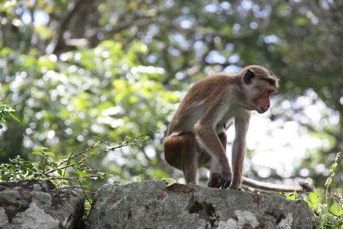 20130304斯里蘭卡[SONY] 272.jpg