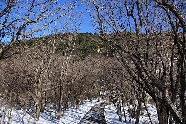 20141203黃山與宏村[大c] 349.jpg