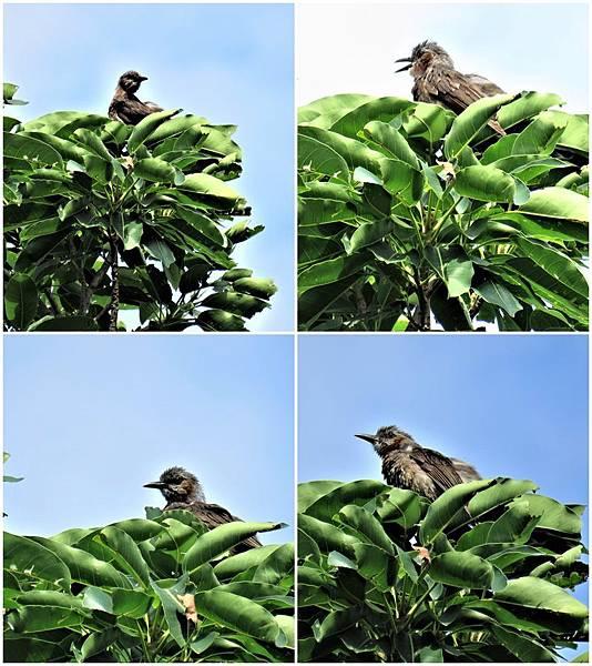 鳥page.jpg