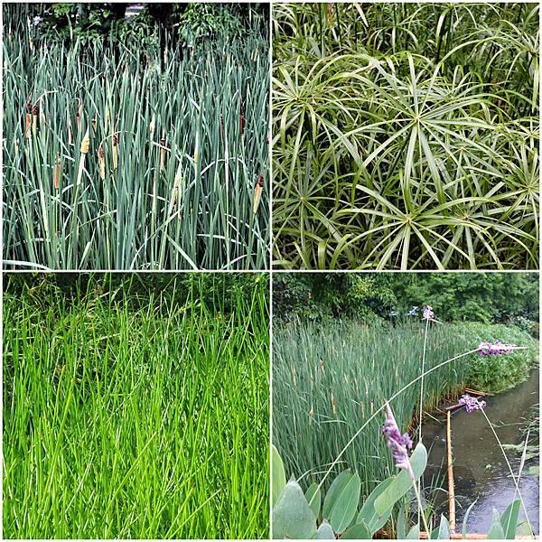 水生植物page.jpg