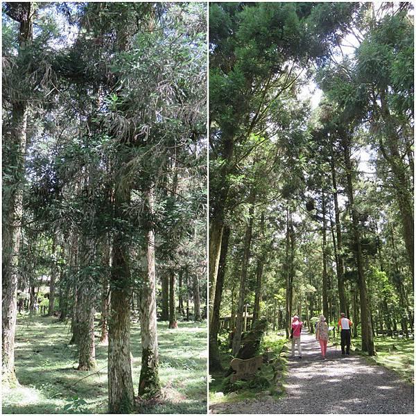 天然造林page.jpg
