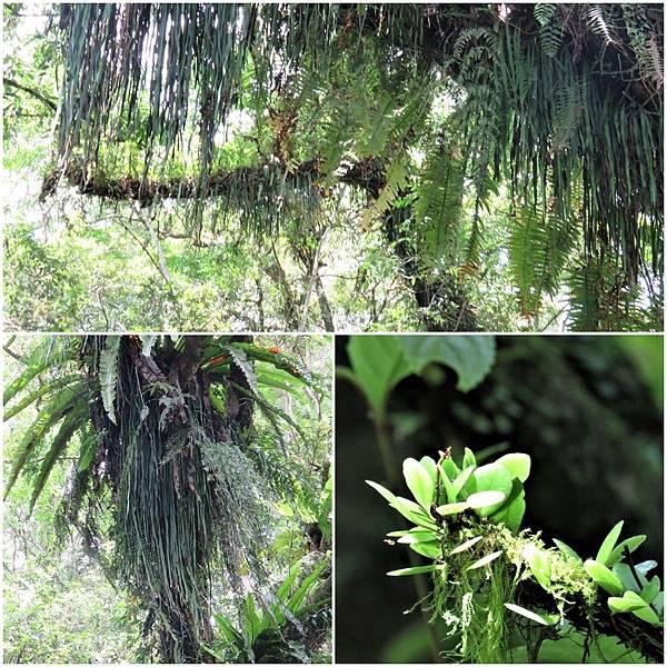 樹上植物page.jpg