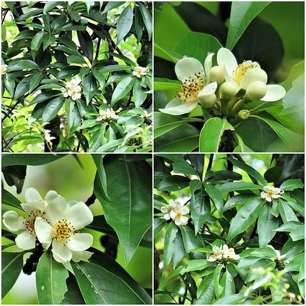 樹花.jpg