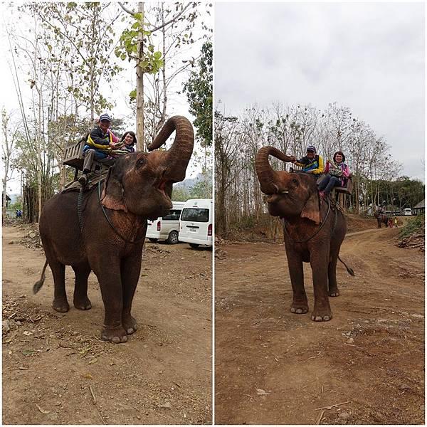 大象吃甘蔗page.jpg