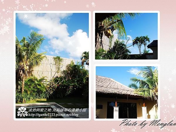椰子樹和雞蛋花.jpg