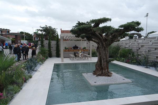 Una veduta dell'albero d'ulivo