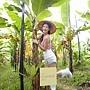 Janet認養的香蕉樹Jananas