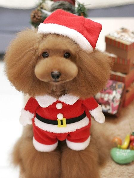 圖說四:專為毛小孩設計的「聖誕老人變身裝」,可愛造型完全擄獲爸媽們的心,近期詢問度增加不少。 (1)