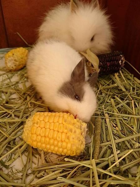 統一阪急台北店_恰恰食堂飼養小動物的恰恰農場