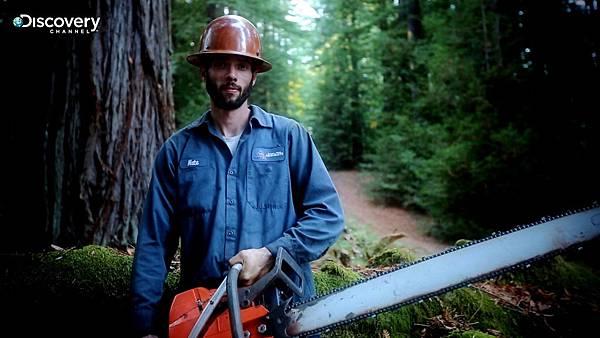 爬樹人爬樹砍枯枝