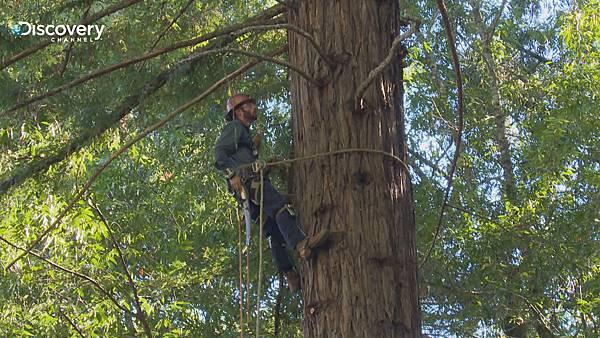 爬樹人僅靠一條核心繩爬樹