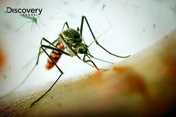 蚊子造成瘧疾、茲卡病毒、登革熱等病症,一年導致100萬人死亡