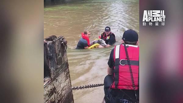 消防員拯救小豬佩妮 使用救生衣包裹