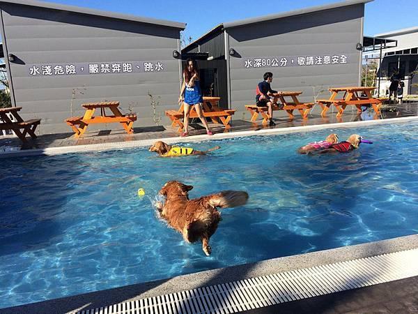 圖八:屏東恆春地區的「寵愛月台」,能讓寵物享受有水療設施的超大游泳池