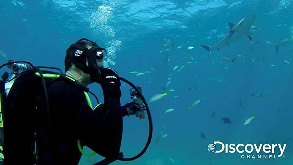 Discovery頻道鯊魚週歡慶30週年《貝爾鯊魚鬥》 邀請地表最強求生專家貝爾吉羅斯來助陣