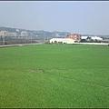 新竹竹東-竹林大橋旁的綠油油稻田.jpg