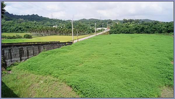新竹峨眉獅頭山風景區 - 松鶴樓.如茵綠草