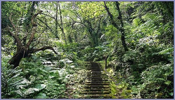 新竹峨眉獅頭山風景區 - 充滿野性之美的藤坪步道