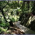 林蔭蔽日的後慈湖秘境步道
