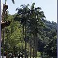 大溪後慈湖導覽行程 - 種植成排大王椰子樹的碼頭區