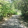 中和市流浪犬收容所的林蔭山道.JPG