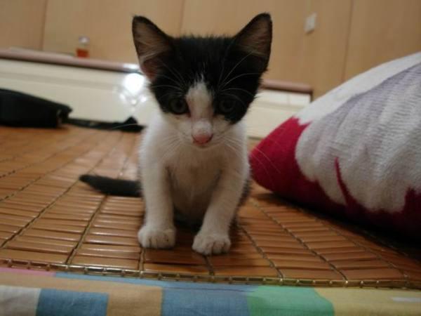 94-07-23 寄養ㄟ第一隻貓咪:黑旋風 - 01.jpg