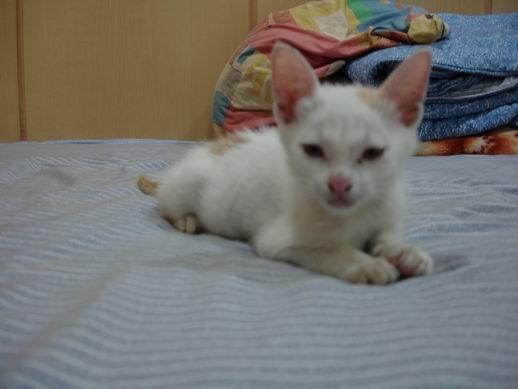 94-06-04 小貓咪 012.JPG