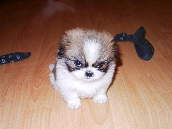 有殺氣的小狗.jpg