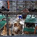 八里保育場 - 可愛狗狗 1