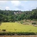桃園蘆竹貓尾崎步道 - 藍天白雲、金黃稻穗,如畫般的大自然美景