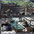八里保育場 - 可愛狗狗 2