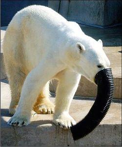 北極熊裝水管..裝「象」XD.JPG