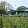 湖口老街 - 湖新路旁的茶園.jpg