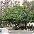 桃園龜山鄉眷村故事館 - 館旁的大榕樹