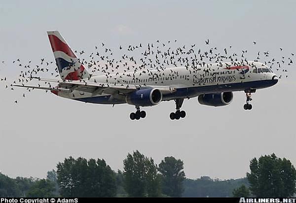小鳥攻擊大鳥.jpg