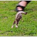 25254401:奔跑吧!!圓圓!!!