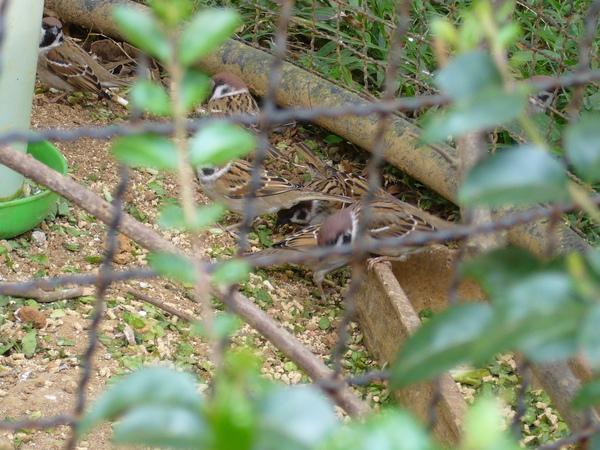動物園的麻雀真肥