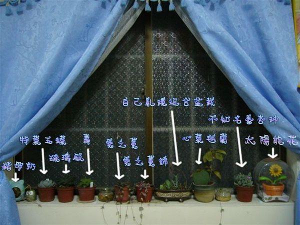 我的窗檯花園