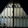 颱風早晨的窗