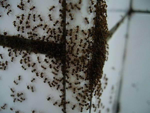 一群螞蟻啦~~><