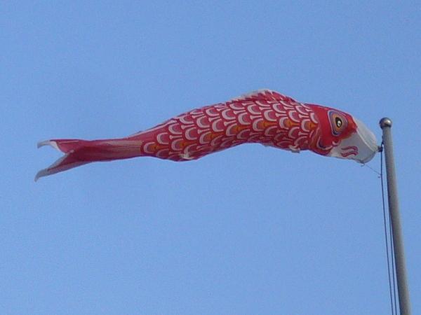 好想要鯉魚旗哦
