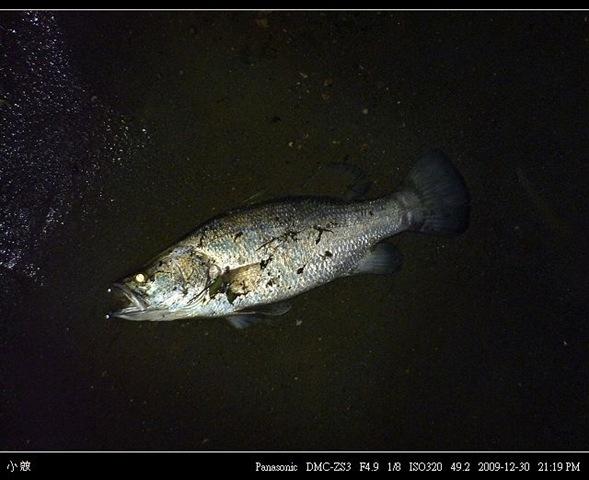 24768354:尋找釣點之夜間亂拍