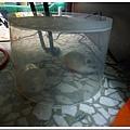 24804226:簡易的抓寵物鼠好方法