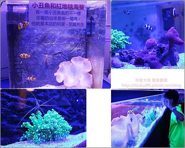 尼莫先生海洋生物主題餐廳 13.jpg