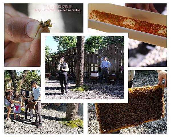 宜蘭養蜂人家蜂采館 12.jpg