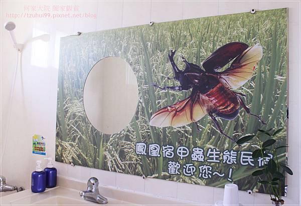 宜蘭鳳凰宿民宿甲蟲生態體驗館 15.JPG